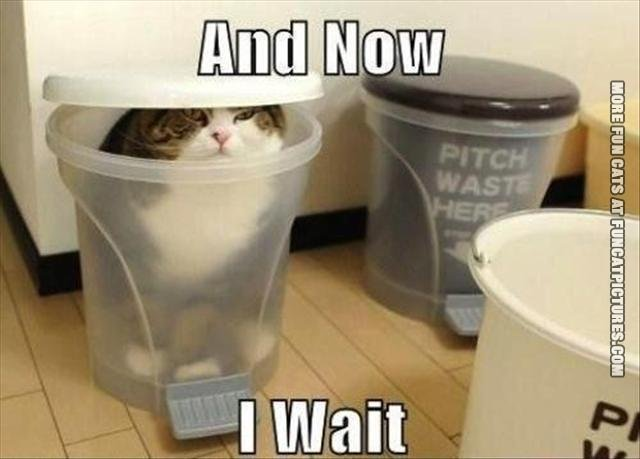 funny-cat-pics-and-now-i-wait