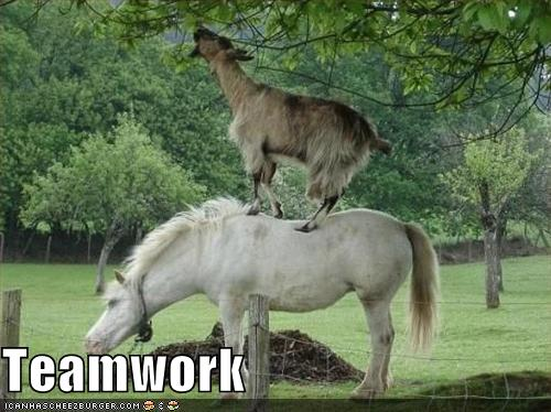 5296e108e0294_funny_pictures_horse_and_goat_work_as_a_team